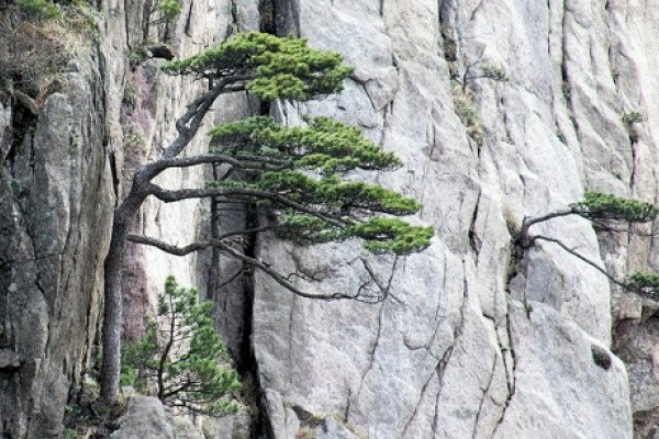 Mountain tree in China
