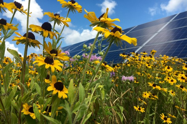 A pollinator-friendly solar development