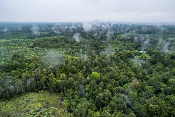 A view from above, courtesy CIFOR, of a promised capital city for Indonesia. Do you see a place for a solar grid?